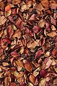 백그라운드, 계절, 가을, 식물, 잎, 낙엽, 풍경 (컨셉), 사람없음
