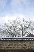 사진, 풍경 (컨셉), 겨울, 눈 (얼어있는물), 설경, 전통가옥, 감나무