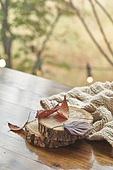 창문 (인조물건), 카페, 계절, 가을, 겨울, 뜨거움 (컨셉), 니트천 (천), 스웨터 (상의), 전구 (전등빛), 테이블, 잎 (식물부분), 나무, 목도리, 단풍잎 (잎)