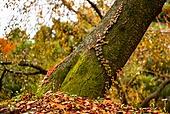 가을, 가을 (계절), 계절, 감성 (컨셉), 단풍나무 (낙엽수), 단풍철 (가을), 단풍잎 (잎), 낙엽, 잎, 담쟁이 (Creeper Plant), 덩굴식물 (식물)