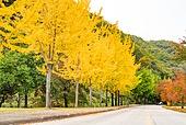 가을, 가을 (계절), 은행나무, 단풍나무 (낙엽수), 단풍철 (가을), 단풍잎 (잎), 은행잎 (잎)