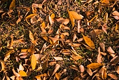가을, 가을 (계절), 계절, 감성, 백그라운드, 낙엽, 단풍나무 (낙엽수), 단풍잎 (잎), 11월