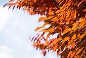 가을, 가을 (계절), 계절, 단풍나무 (낙엽수), 단풍철 (가을), 단풍잎 (잎), 자연 (주제)