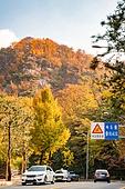 가을, 가을 (계절), 한국 (동아시아), 단풍잎 (잎), 단풍철 (가을), 단풍길, 단풍나무, 자연명소