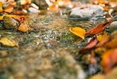 가을, 가을 (계절), 계절, 감성, 백그라운드, 낙엽, 단풍철 (가을), 단풍잎 (잎), 11월, 계곡, 자연풍경 (교외전경)