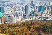 가을, 가을 (계절), 단풍나무 (낙엽수), 단풍철 (가을), 단풍잎 (잎), 동대문구 (서울), 남산 (서울)