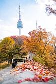 가을, 가을 (계절), 한국 (동아시아), 서울 (대한민국), 남산 (서울), 남산서울타워, 단풍나무 (낙엽수), 단풍철 (가을), 단풍잎 (잎), 단풍나무, 단풍길
