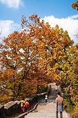 가을, 가을 (계절), 낙엽, 단풍나무 (낙엽수), 단풍철 (가을), 단풍잎 (잎), 단풍나무, 단풍길