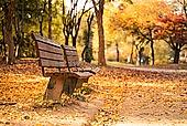 가을, 가을 (계절), 계절, 단풍나무 (낙엽수), 단풍철 (가을), 단풍잎 (잎), 자연 (주제), 낙엽관목, 낙엽, 공원, 벤치, 공원벤치