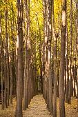가을, 가을 (계절), 나무, 숲, 시골길 (보행로), 자연 (주제), 자연풍경 (교외전경)