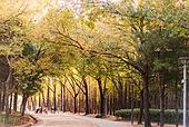 가을, 가을 (계절), 숲, 산책길