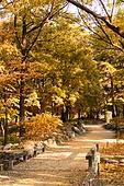 가을, 가을 (계절), 계절, 단풍나무 (낙엽수), 단풍철 (가을), 단풍잎 (잎), 자연 (주제), 낙엽관목