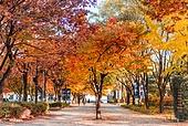 가을, 가을 (계절), 계절, 단풍나무 (낙엽수), 단풍철 (가을), 단풍잎 (잎), 자연 (주제), 단풍길, 낙엽관목