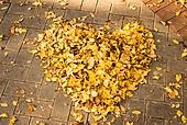가을, 가을 (계절), 계절, 단풍나무 (낙엽수), 단풍철 (가을), 단풍잎 (잎), 단풍길, 낙엽관목, 낙엽, 은행잎
