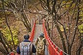 다리 (인공구조물), 가을, 자연 (주제), 남성, 하이킹 (아웃도어)