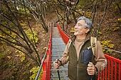 다리 (인공구조물), 가을, 자연 (주제), 남성, 하이킹 (아웃도어), 여행, 산림욕