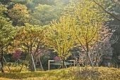 가을, 빛 (자연현상), 나무
