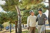 소나무, 소나무숲, 노인 (성인), 걷기 (물리적활동), 미소, 밝은표정, 친구 (컨셉)