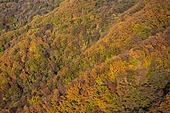 자연 (주제), 산, 자연풍경, 산림, 가을, 드론촬영 (카메라앵글), 항공촬영, 가을 (계절), 단풍나무 (낙엽수), 단풍철 (가을)