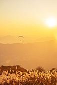 한국인, 익스트림스포츠, 패러글라이딩 (패러슈팅), 비행, 비행 (움직이는활동), 취미, 레저활동, 레저활동 (활동), 여가 (주제), 도전 (컨셉), 모험, 익스트림스포츠 (스포츠), 자유, 패러슈팅 (항공스포츠), 갈대, 팜파스 (Ornamental Grass)