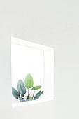 벽 (건물특징), 창문 (인조물건), 식물, 인테리어