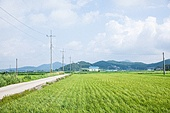 시골풍경, 길, 시골길 (보행로), 컨츄리로드 (도로), 시골풍경 (교외전경), 농업 (주제)