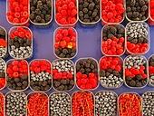 베리, 과일, 상품진열 (소매업장비)