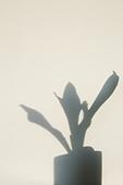 실내, 백그라운드, 햇빛 (빛효과), 뜨거움 (컨셉), 인테리어, 식물, 그림자, 벽 (건물특징), 화분