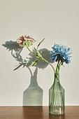 실내, 백그라운드, 햇빛 (빛효과), 뜨거움 (컨셉), 인테리어, 벽 (건물특징), 식물, 꽃, 꽃병 (용기)