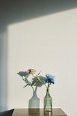 실내, 백그라운드, 햇빛 (빛효과), 뜨거움 (컨셉), 인테리어, 벽 (건물특징), 식물, 꽃, 꽃병 (용기), 그림자, 협탁, 서랍장 (가구)