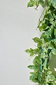 실내, 백그라운드, 햇빛 (빛효과), 뜨거움 (컨셉), 인테리어, 식물, 꽃