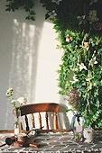 실내, 백그라운드, 햇빛 (빛효과), 뜨거움 (컨셉), 인테리어, 식물, 꽃, 의자 (좌석), 테이블, 그림자, 꽃병, 장식품 (인조물건)