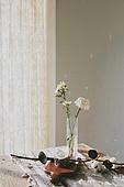 실내, 백그라운드, 햇빛 (빛효과), 뜨거움 (컨셉), 인테리어, 식물, 꽃, 꽃병, 목화, 목화솜, 커튼 (데코르), 장식품 (인조물건)