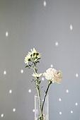 실내, 빔 (상태), 빛 (자연현상), 백그라운드, 햇빛, 인테리어, 그림자, 벽 (건물특징), 패턴, 식물, 꽃, 꽃병 (용기)