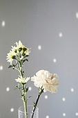 빔 (상태), 빛 (자연현상), 백그라운드, 햇빛, 뜨거움, 인테리어, 식물, 꽃, 벽 (건물특징)