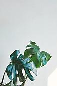빔 (상태), 빛 (자연현상), 백그라운드, 햇빛, 뜨거움, 인테리어, 식물, 치즈나무 (열대관목), 야자나무 (열대나무)