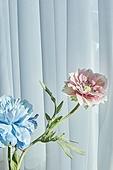 빔 (상태), 빛 (자연현상), 백그라운드, 햇빛, 인테리어, 식물, 커튼 (데코르), 꽃, 꽃병
