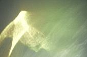 빔 (상태), 빛 (자연현상), 백그라운드, 햇빛, 인테리어, 식물, 반사 (빛효과), 홀로그램