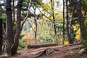 훈련, 로프다리, 로프다리 (다리), 밧줄 (인조물건), 자연휴양림 (산림)