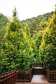 시골길 (보행로), 하이킹 (아웃도어), 산, 산림, 자연휴양림, 데크길, 산책길 (보행로)