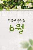 모바일백그라운드, 문자메시지 (전화걸기), 6월, 여름, 담장배경 (경계선), 잎
