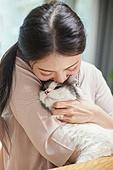 프리랜서, 고양이 (고양잇과), 반려동물 (길든동물), 하이랜드스트레이트, 애정 (밝은표정)