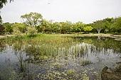 한밭수목원