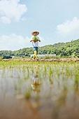 귀농, 시골풍경 (교외전경), 농업, 농업활동, 농부 (농촌직업), 농업 (주제), 모내기, 모내기 (농업), 논, 모판 (모내기)