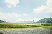 시골풍경 (교외전경), 농업 (주제), 벼, 시골풍경