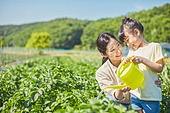 어린이 (나이), 농장, 소녀, 채소밭, 농업, 채소밭 (경작지), 식물