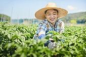 한국인, 귀농, 농업, 농부 (농촌직업), 채소밭