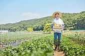 귀농, 농업, 농부 (농촌직업), 수확, 수확 (움직이는활동), 유기농, 채소밭 (경작지), 텃밭작물 (경작), 농작물, 공동체밭