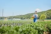 귀농, 농부 (농촌직업), 수확, 채소밭, 농작물, 생감자 (채소)