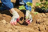 농업, 농부 (농촌직업), 시골풍경, 채소, 채소밭 (경작지), 농작물, 심기 (움직이는활동)